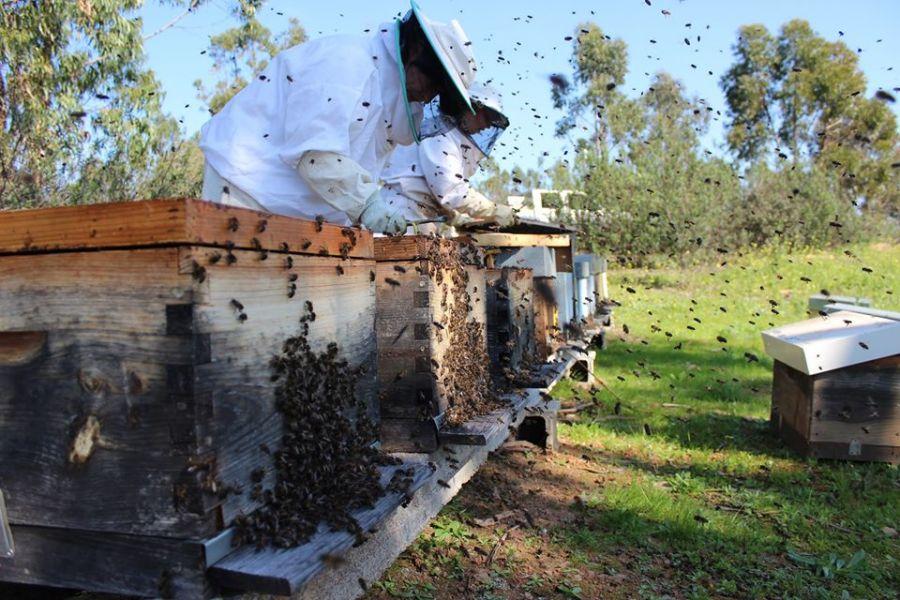 Workshop - Introdução ao mundo das abelhas e apicultura