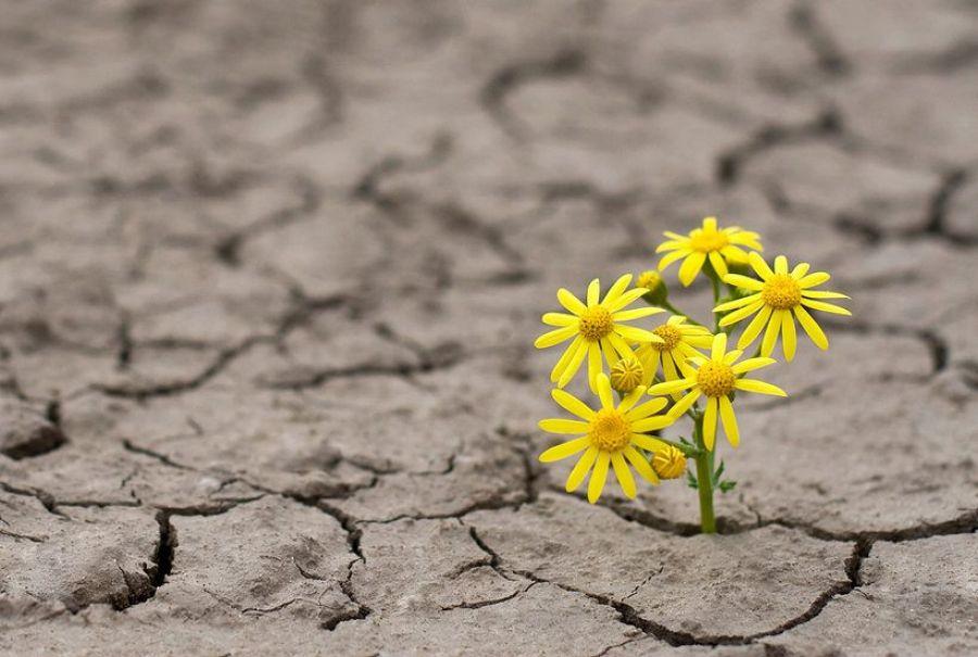 Crise, uma Oportunidade para a Mudança
