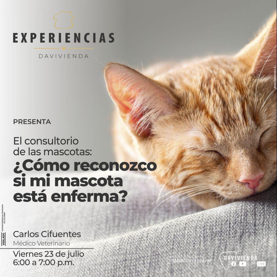 El consultorio de las mascotas: ¿Cómo reconozco si mi mascota está enferma?