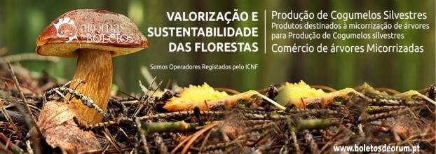 Curso de Produção de Cogumelos Métodos e Técnicas - Silvestres - Troncos e Substratos