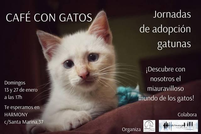 I Jornadas de Adopción Gatunas en Badajoz