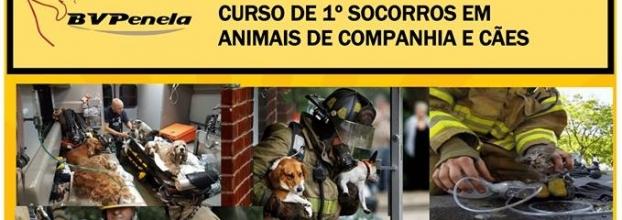 Curso de primeiros socorros em animais de companhia e cães