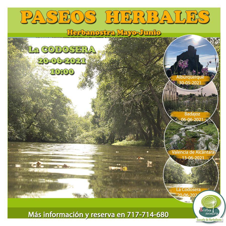 Paseo herbal en la Codosera