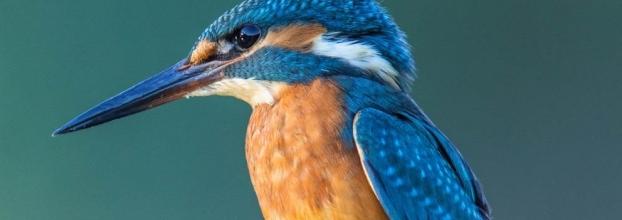 Conferência 'Aves' no âmbito do ciclo de conferências 'Rios de Portugal'