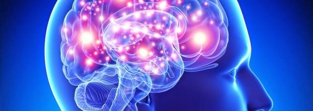 Workshop ' NeuroCoaching e Liderança'
