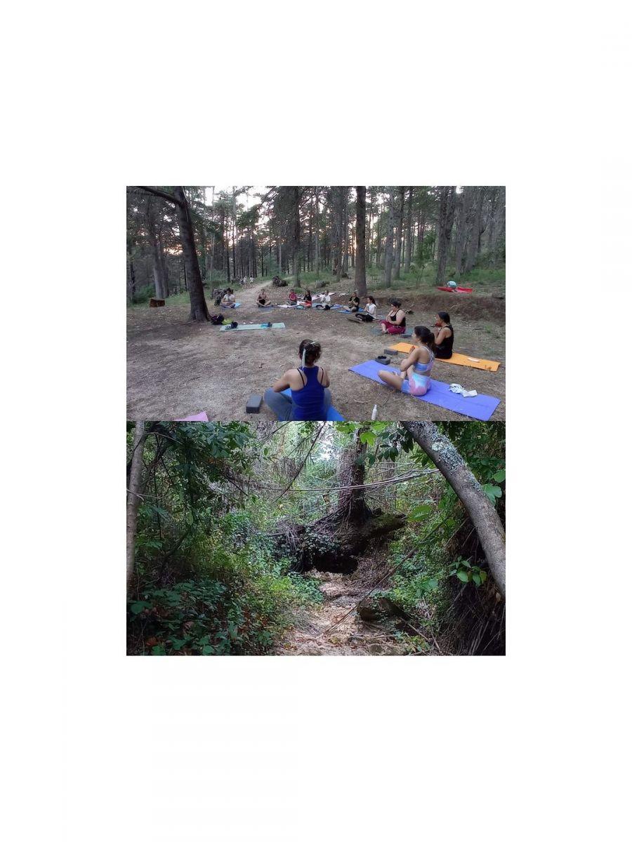 Caminhada, Yoga,Jogos na floresta & Piquenique