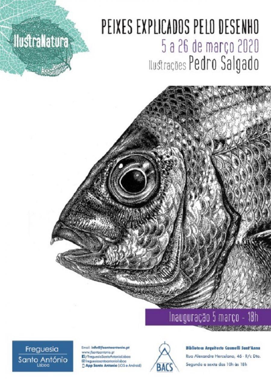 Peixes explicados pelo desenho