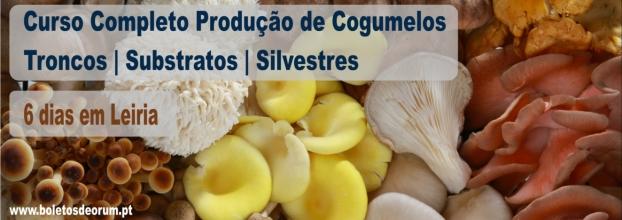 FORMAÇÃO COMPLETA DE PRODUÇÃO DE COGUMELOS - 6 SÁBADOS