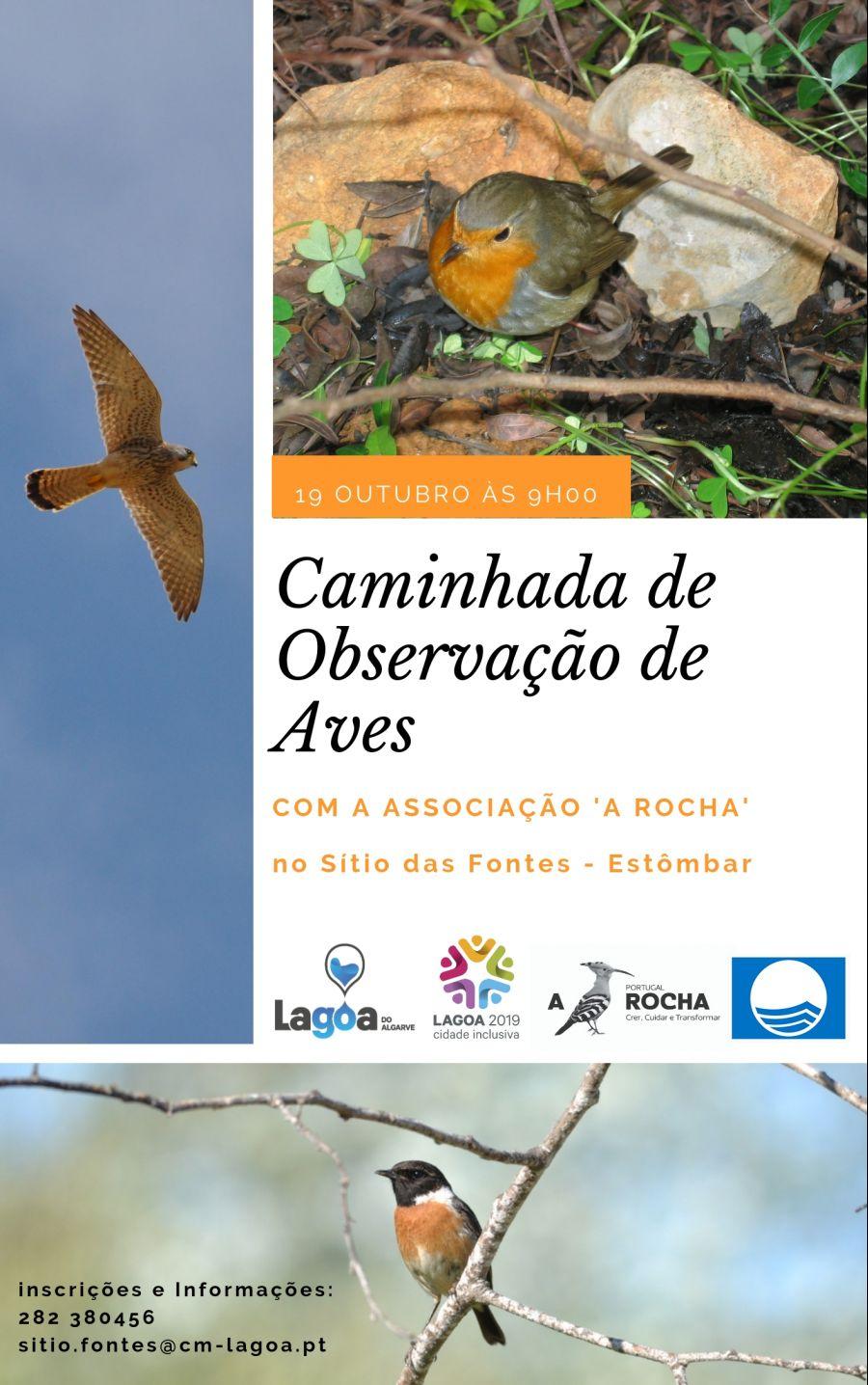 Caminhada de Observação de Aves (com a Associação A Rocha)