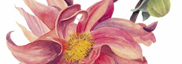 Workshop de Ilustração Botânica