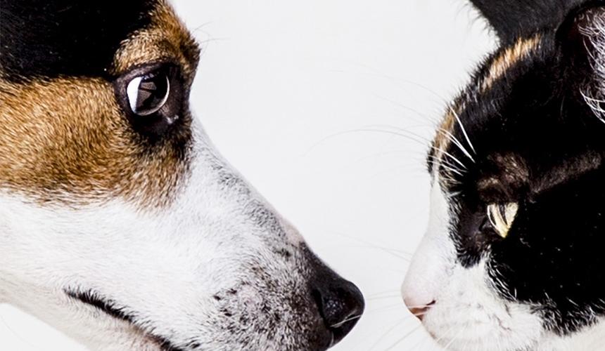 Createatro - 'Academia de arte jara' y 'Conciencia animal'