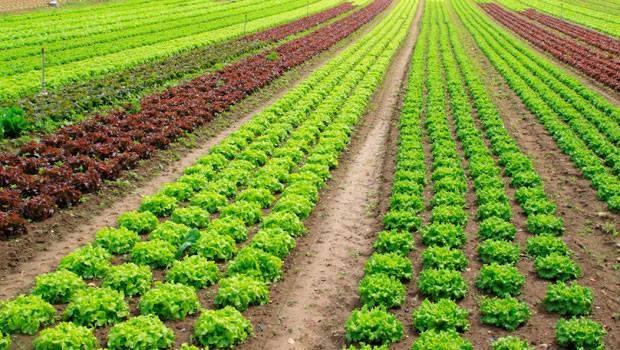 Curso «La agroindustria en la Campiña Sur de Extremadura»