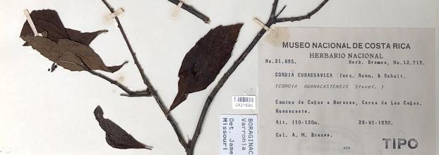 Tesoros del herbario, ejemplares tipo. Herbario Nacional de Costa Rica. Historia natural