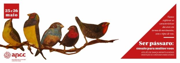Ser pássaro: ensaio para muitos voos