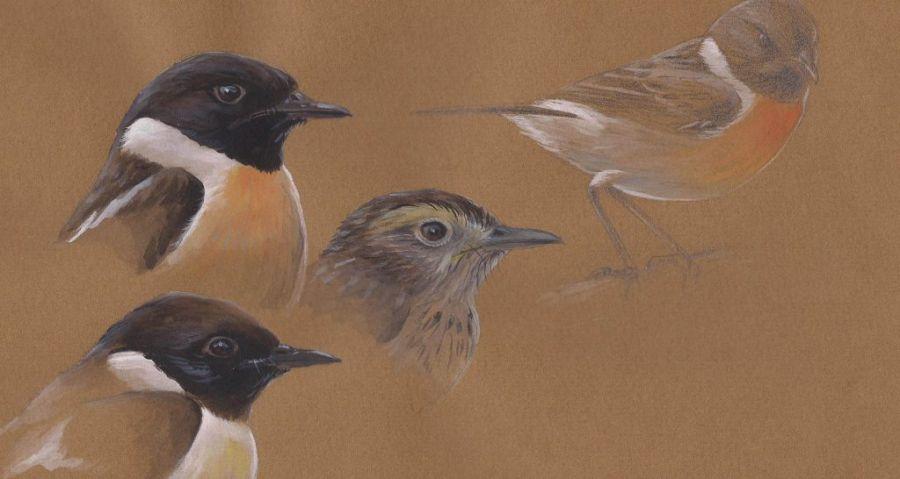 Viagens Ornitológicas - exposição