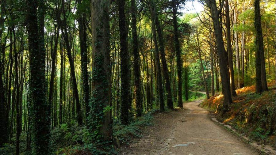 Caminhada e Banho de Floresta em Sintra