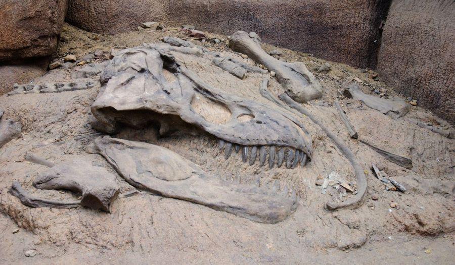 Fósiles. Conociendo el pasado de la tierra
