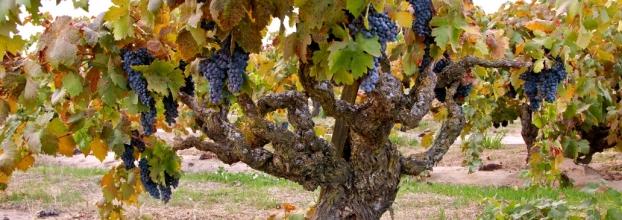 Curso de Iniciação à Prova de Vinhos - Nível 1