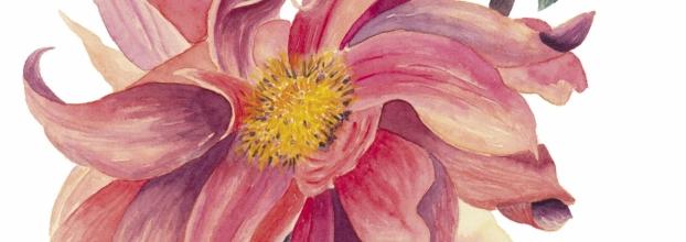 Workshop de Ilustração Botânica (Horário Pós-Laboral)