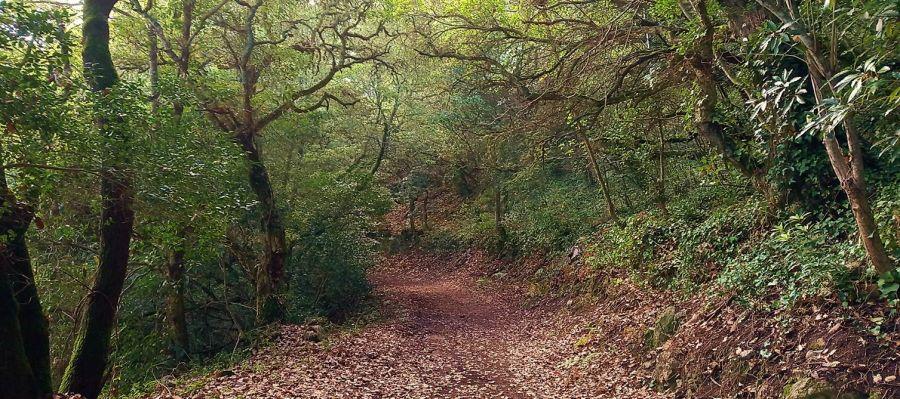 Passeio Sensorial pelos Bosques do Penedo