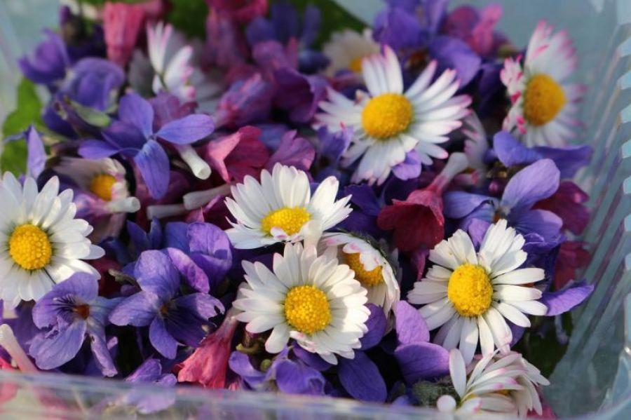 Flores Comestíveis - identificar, semear, degustar