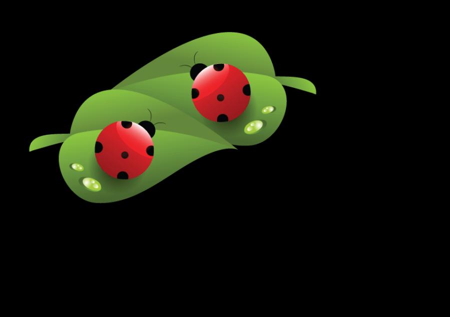 Introdução à Bio Jardinagem