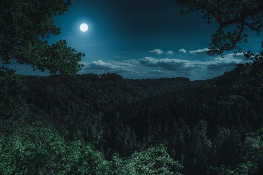 Caminhada e Meditação Lunar no Bosque do Silêncio