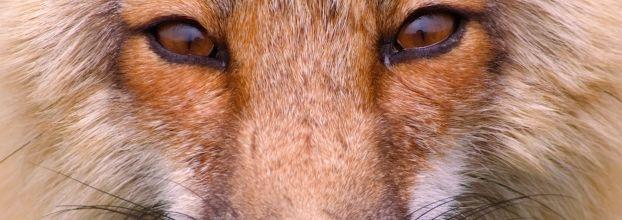 O Animal de Poder - workshop com voz e movimento