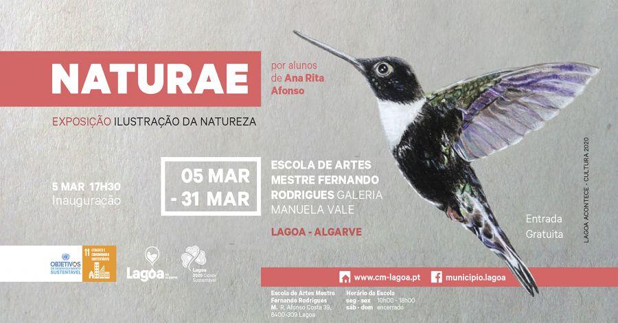 Naturae - Exposição de Ilustração da Natureza | Escola de Artes Mestre Fernando Rodrigues