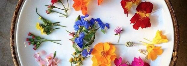 Flores comestíveis na Mouraria Composta
