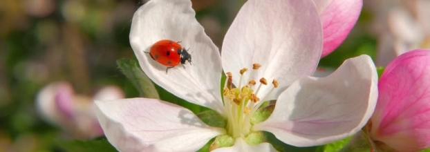 Pomar e Vinha Bio: Controlo de Pragas e Doenças