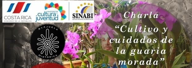 Cultivo y cuidados de la Guaria Morada. Cristopher Arias. Agricultura