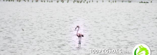 Vamos ver Flamingos