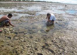 Passos Contados «Pelas margens da Ria Formosa. À procura dos animais da maré baixa»