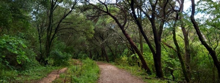Caminhada de Reconexão em Silêncio – Barragem da Mula   Sintra