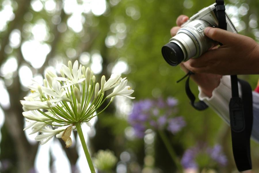 Fábrica de Saberes: Workshop de Fotografia para Seniores