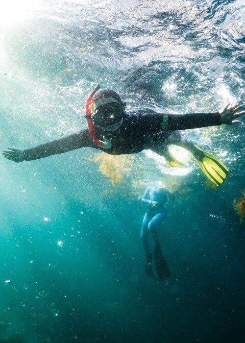 Programa Atlantis promove limpeza de praia e workshop de algas