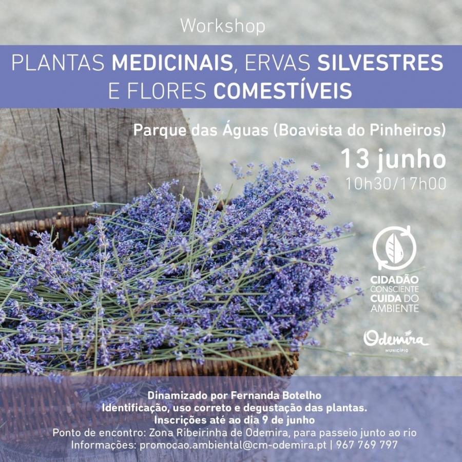 Workshop sobre Plantas medicinais, ervas ...