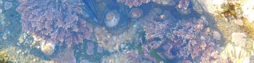 O ouriço-do-mar e o Oceano