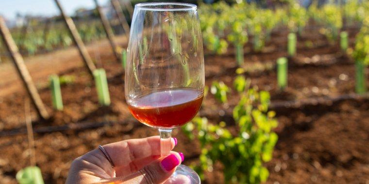 Prova de vinhos das Regiões Demarcadas de Bucelas, Carcavelos e Colares | ESGOTADO