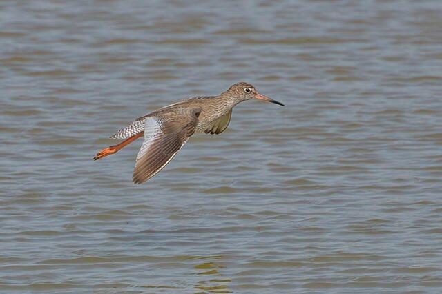 Apresentação do Campeonato Nacional de Ornitologia