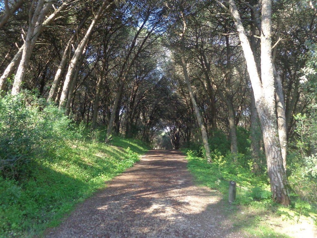 Caminhada por Trilhos e Miradouros de Monsanto - 11kms