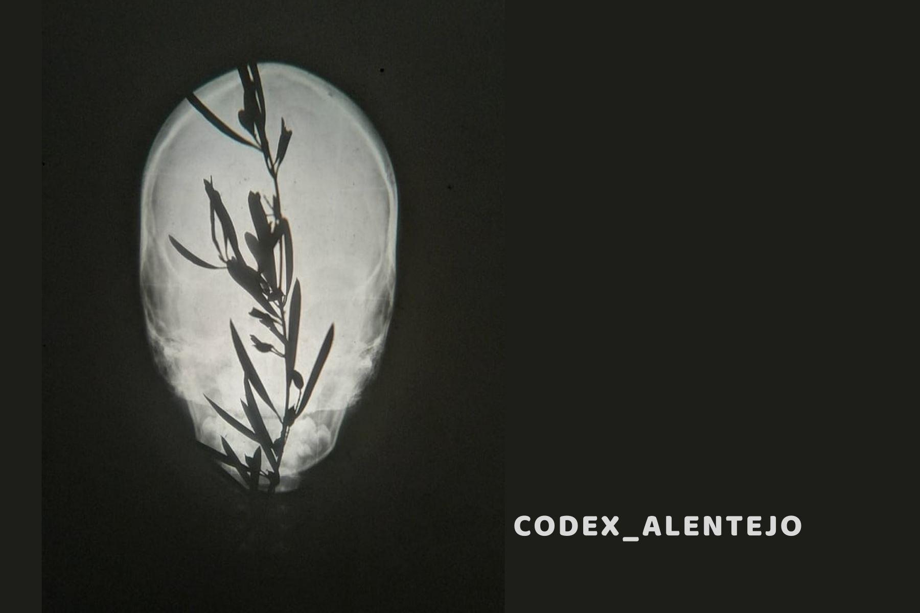 'Codex_Alentejo' - Espetáculo de manipulação de formas animadas em tempo real