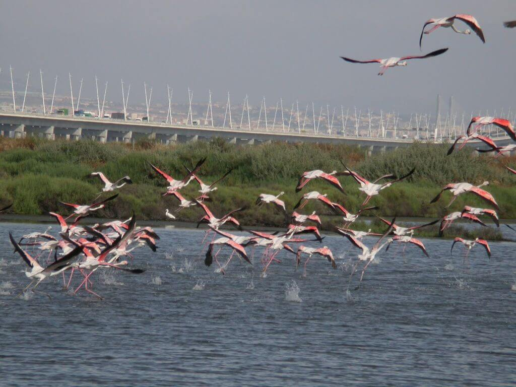 Caminhando com Flamingos