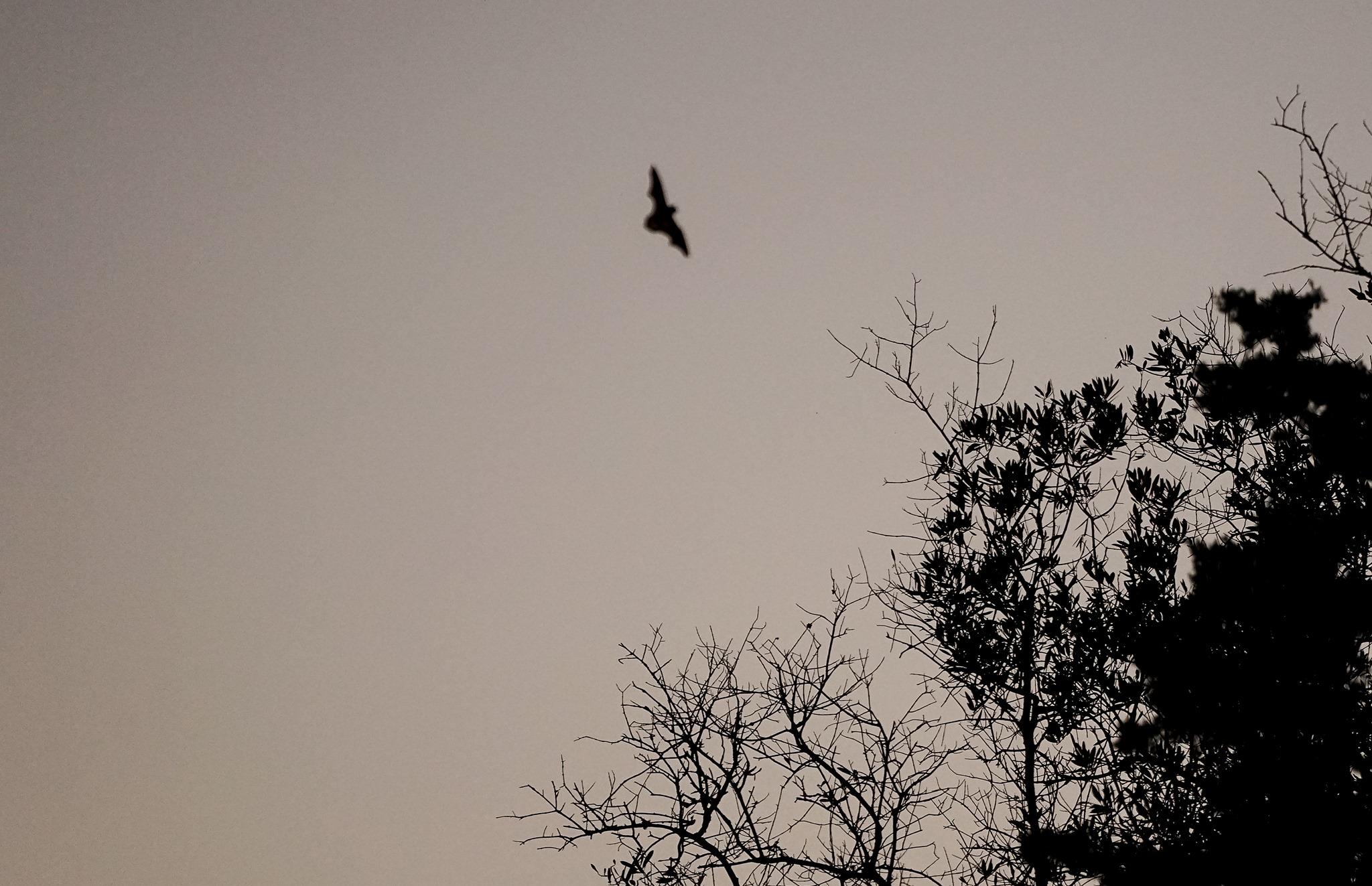Morcegos no Castelo