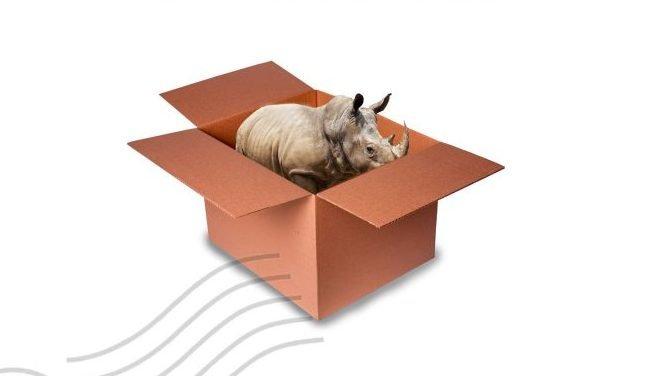 A Viagem do Rinoceronte