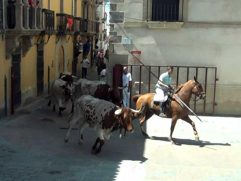 Llegada a la Ciudad del Tradicional Traslado de Bueyes a Caballo