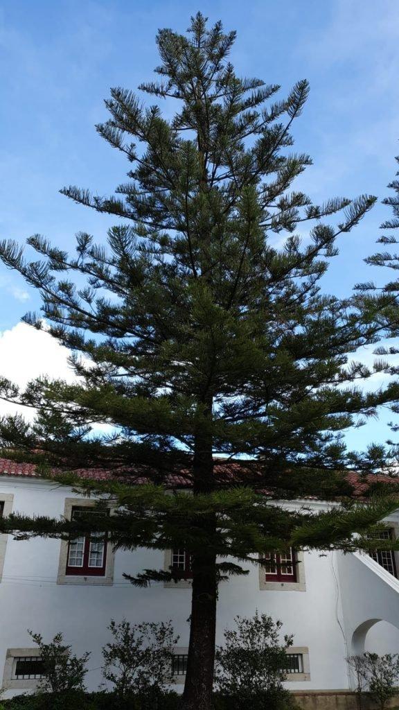 Visita Orientada às 28 Árvores da Quinta Conde dos Arcos