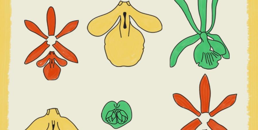 A vida sexual das orquídeas