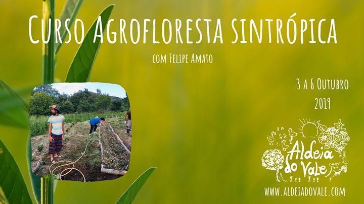 Curso Agricultura Sintrópica com Felipe Amato